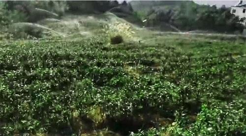 六盘水茶园智能灌溉项目